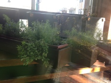 Plant boxes getting some early morning sun at Obladee Wine Bar.
